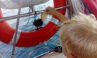 morskie ptaki spotykane na bezludnych wyspach w ogóle nie boją się ludzi