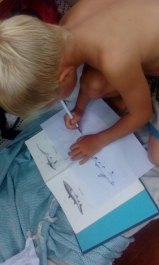 Po wyjściu z wody trzeba narysować spotkane tego dnia rekiny